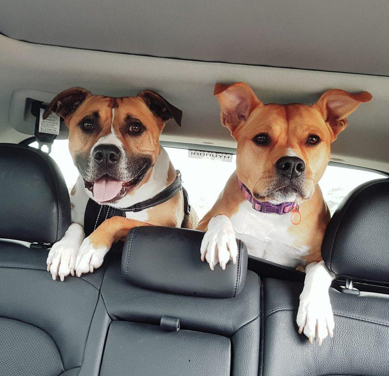 Cali and foster dog Loki | The Naked Paw | Raw Feeding