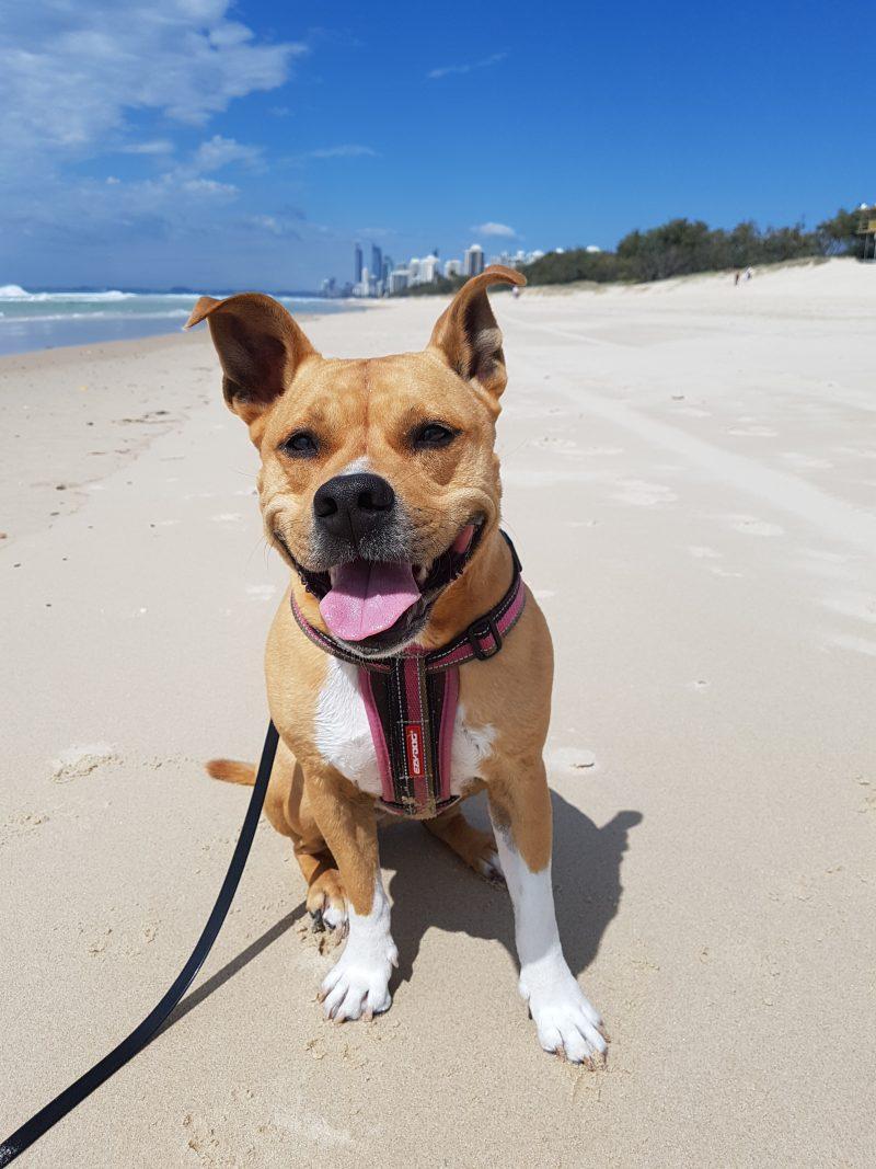 Cali loves Main Beach | The Naked Paw | Raw Feeding